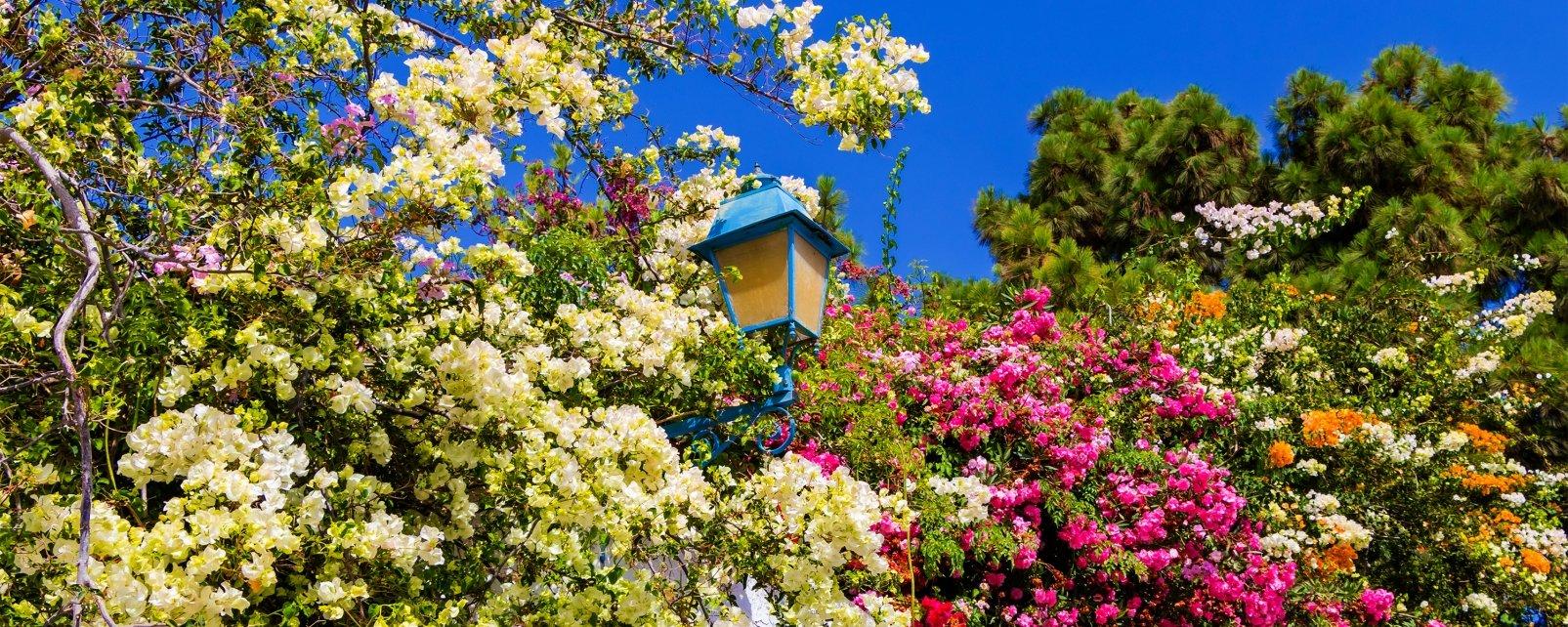 La faune et la flore, tunisie, essence, parfum, végétal, fleur, rose, sidi bou saïd