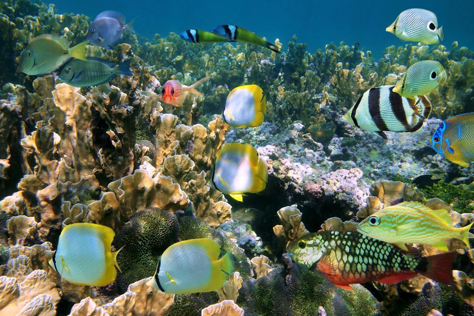 West Caicos , Turks et Caicos