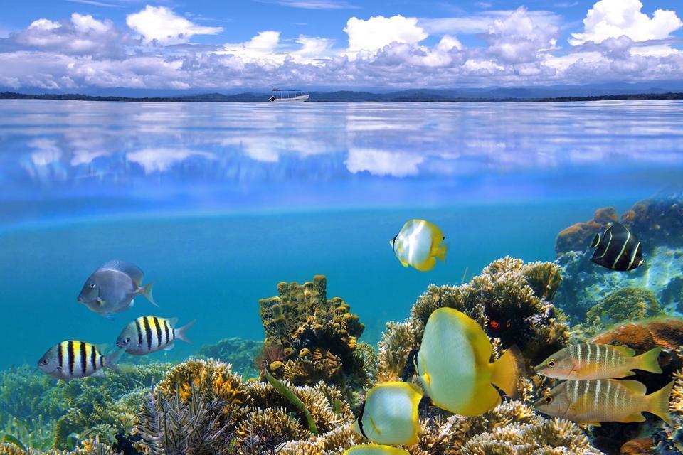 South Caicos , Turks et Caicos