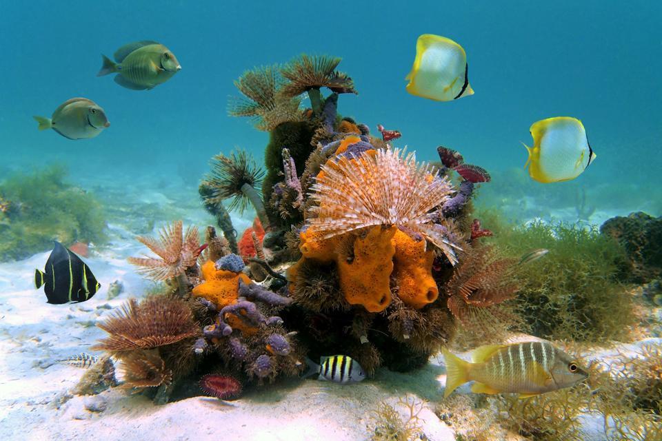 Les réserves naturelles , Turks et Caicos
