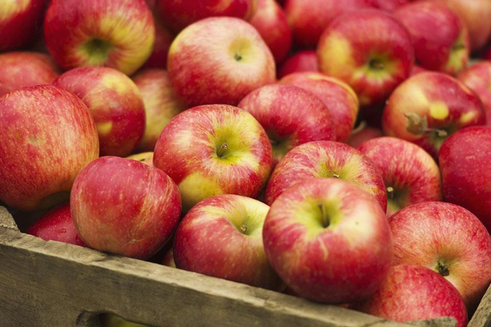 La flora , Las manzanas en Turquía , Turquía