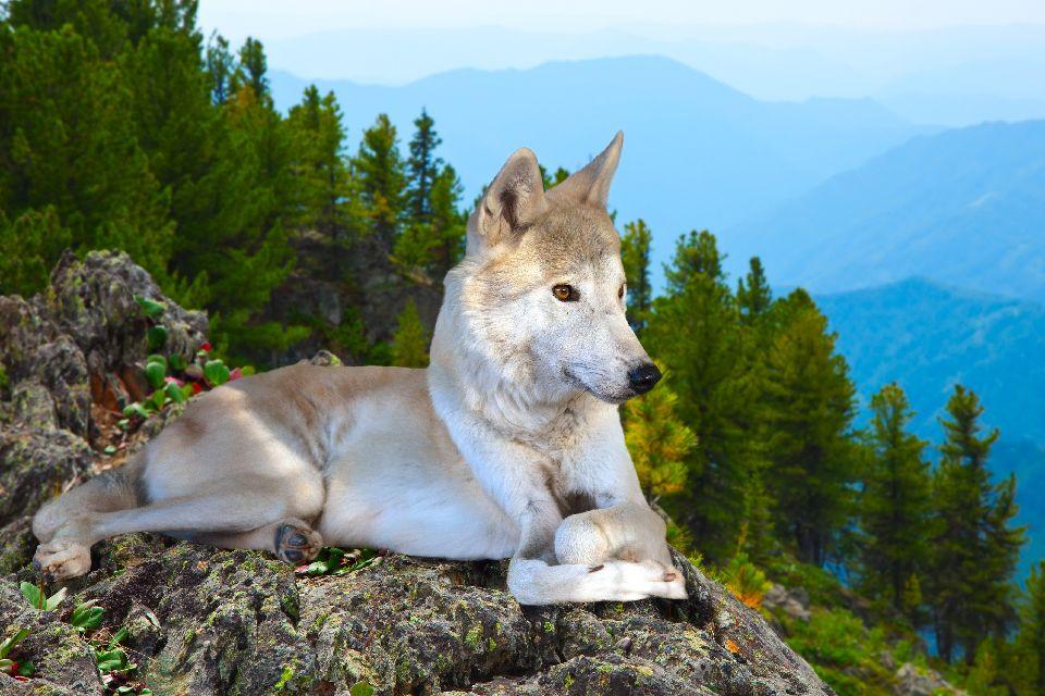 Los osos, lobos, jabalíes, uros, gamos... , Ucrania