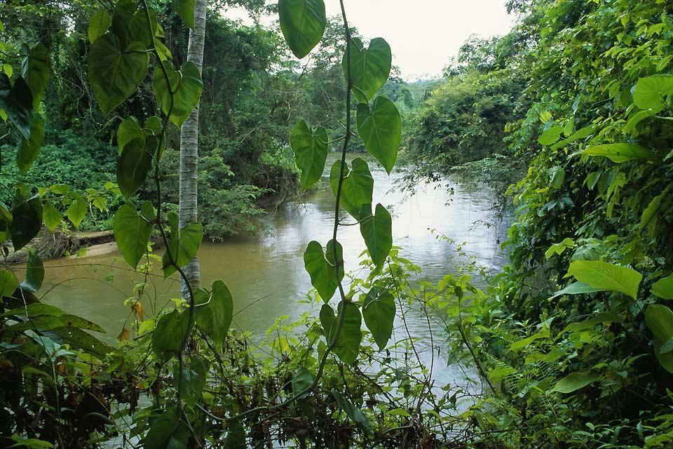 Les basses terres , Les plaines du Belize , Belize