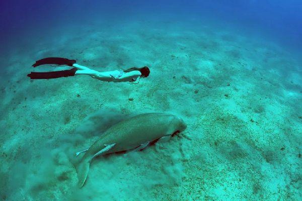 Die Meerestierwelt , Die Meerestiere , Vanuatu