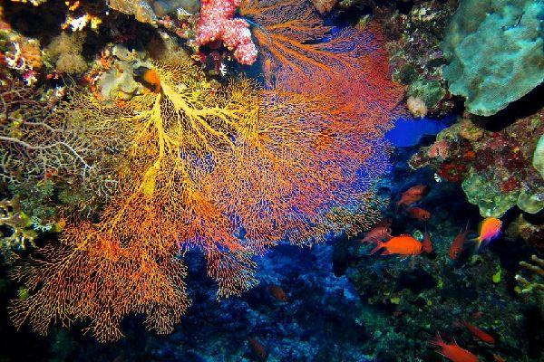 Die Meerestierwelt , Vanuatu