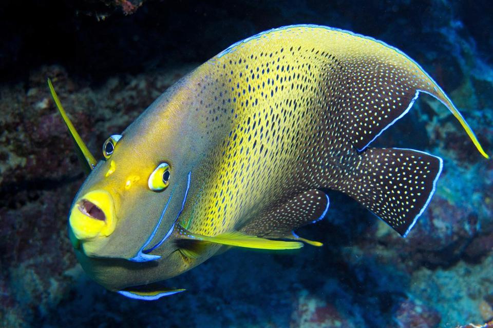 La faune marine , Vanuatu