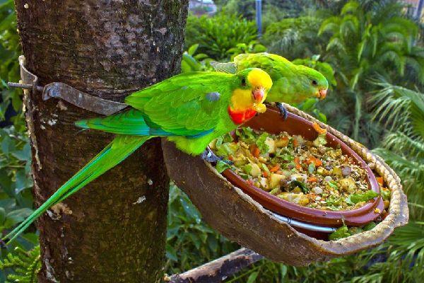 Die Tierwelt , Vanuatu