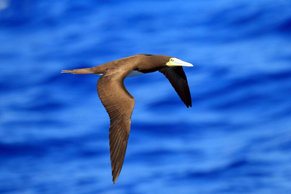 Terrestrial wildlife , Vanuatu