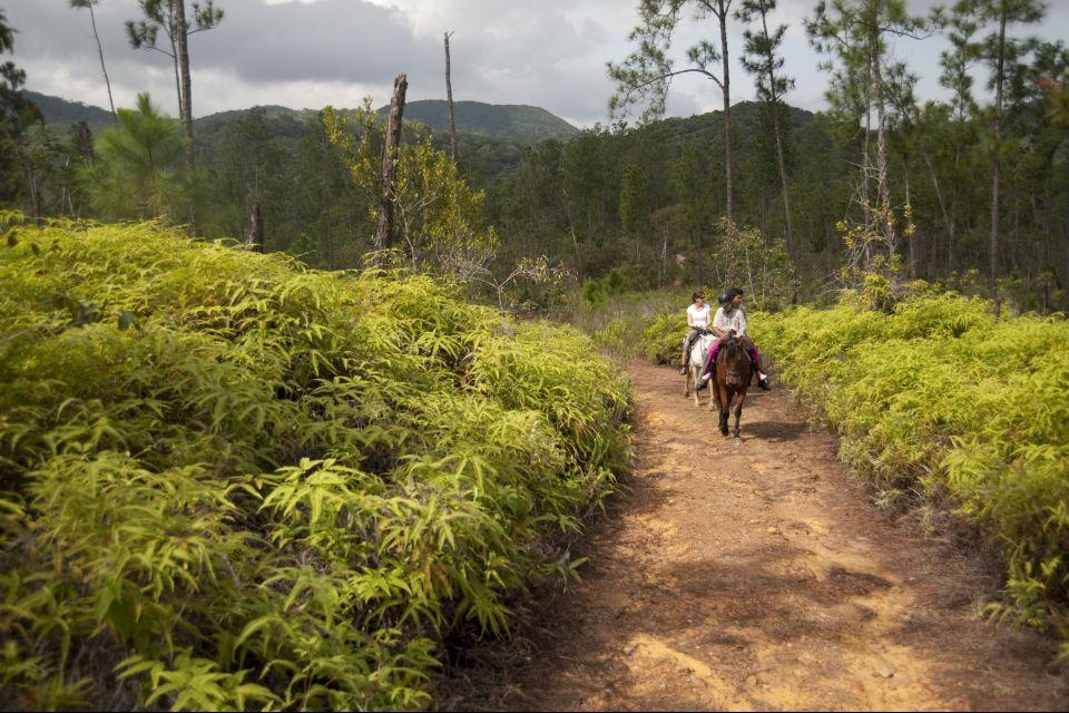 Les paysages, amérique centrale amérique bélize réserve Mountain Pine Ridge forêt parc