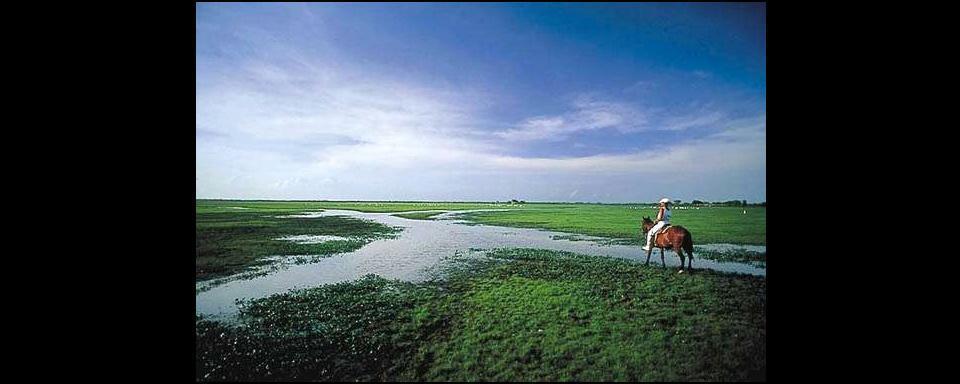 Las planicies de los Llanos