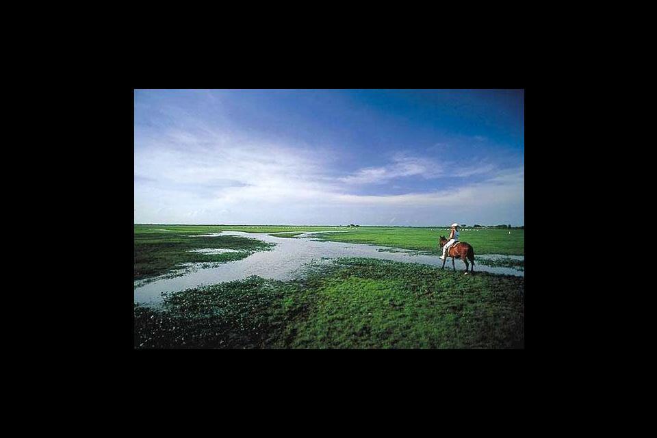 Los Llanos , Las planicies de los Llanos , Venezuela