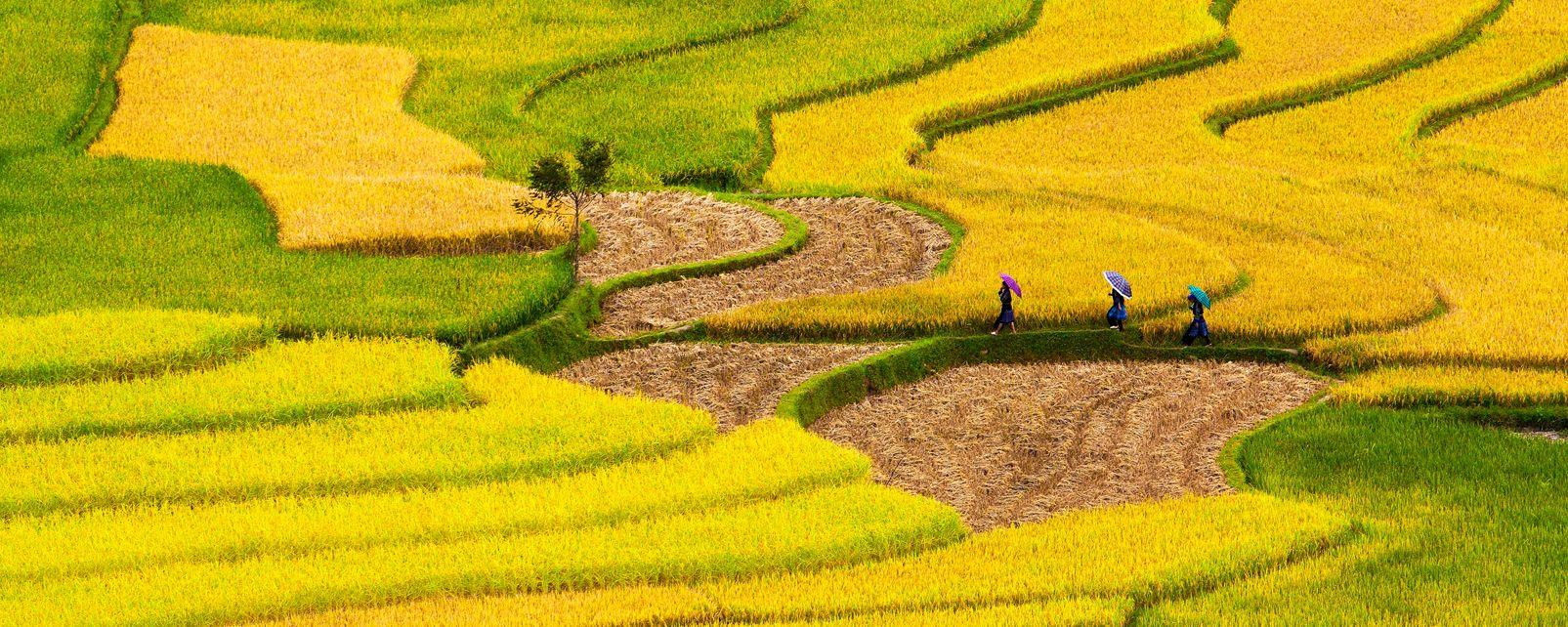 The North Truong Son cordilera.  , The Truong Son Cordillera , Vietnam