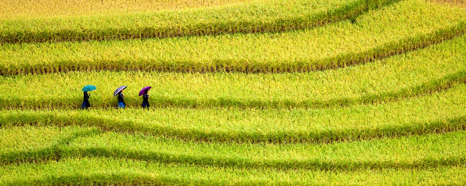 La foresta, i parchi nazionali, l'agricoltura , Qui è la natura che la fa da padrona , Vietnam
