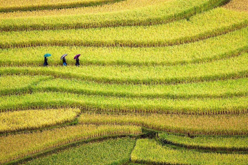 El bosque, los parques nacionales y la agricultura , La naturaleza muy presente , Vietnam
