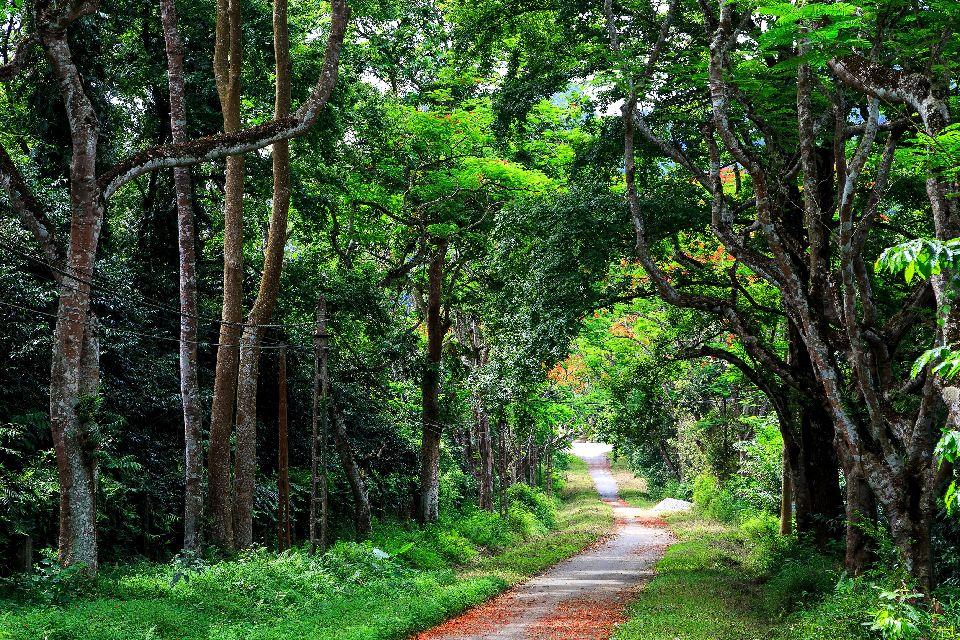El bosque, los parques nacionales y la agricultura , Vietnam