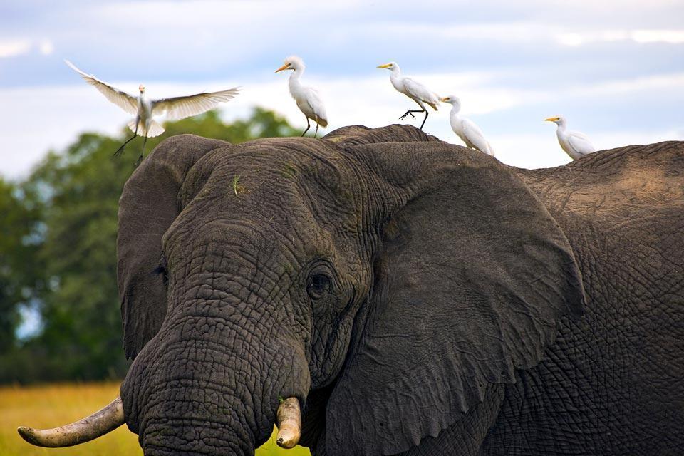 El Parque Nacional Kafue , Zambia