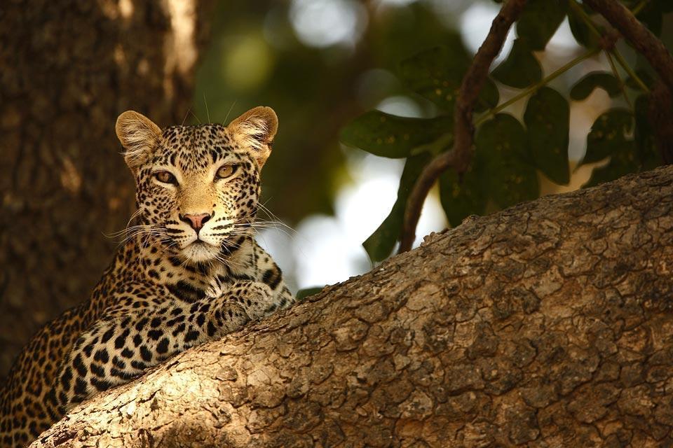 El Parque Nacional Kafue , El parque nacional de la Kafue , Zambia