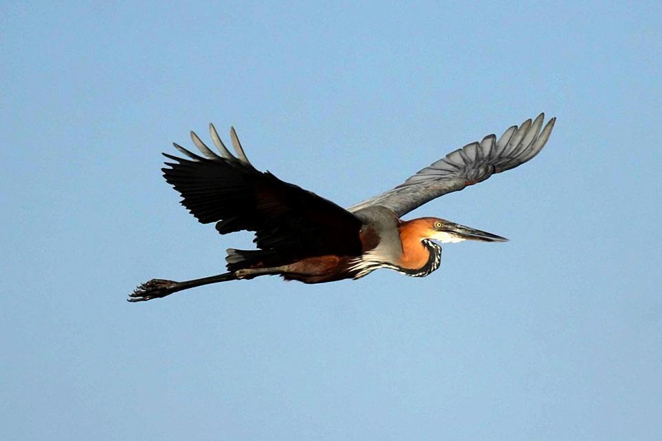 El Parque Nacional de Lochinvar , Zambia