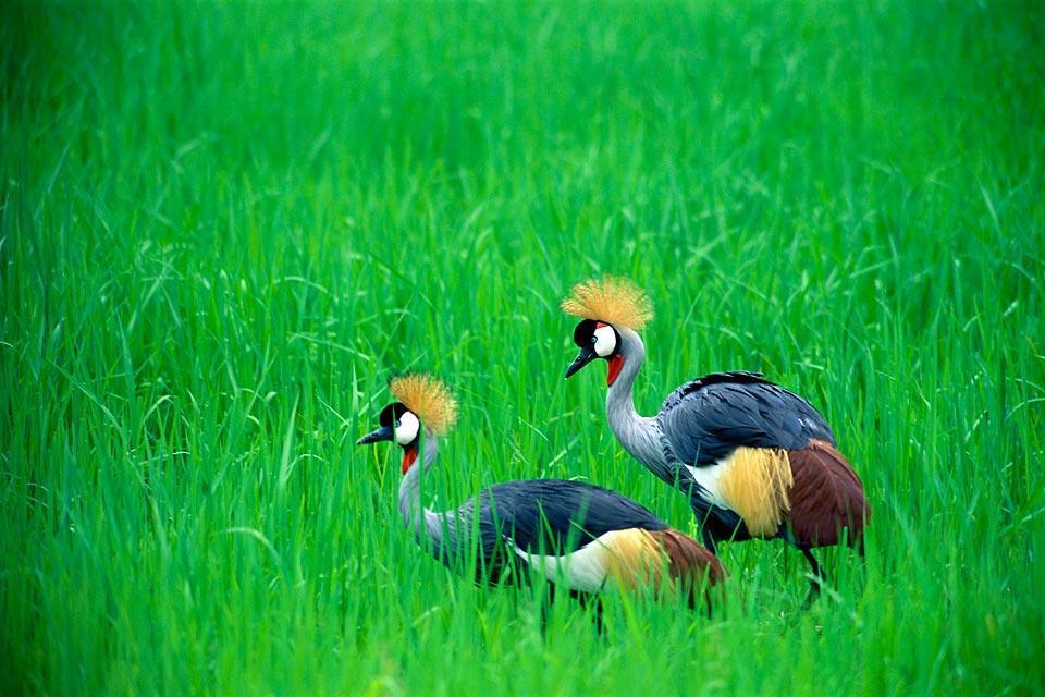 El Parque Nacional de Lochinvar , El parque nacional de Lochinvar , Zambia