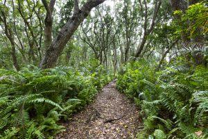 El bosque de Jozani, Los bosques occidentales, Los paisajes, Zanzibar