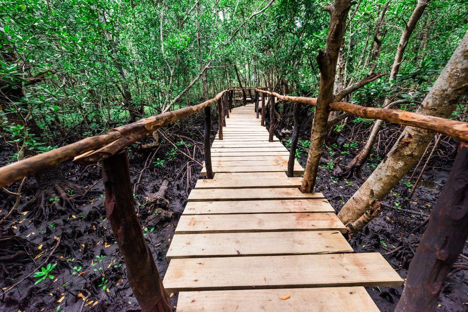 Les paysages, zanzibar, tanzanie, afrique, forêt, végétation, flore, mangrove, palétuvier, plante