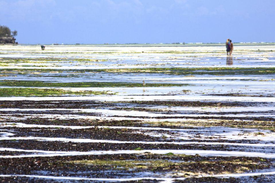 Les paysages, tanzanie, afrique, zanzibar, côte, océan indien, algue, uroa, plage, récolte, femme