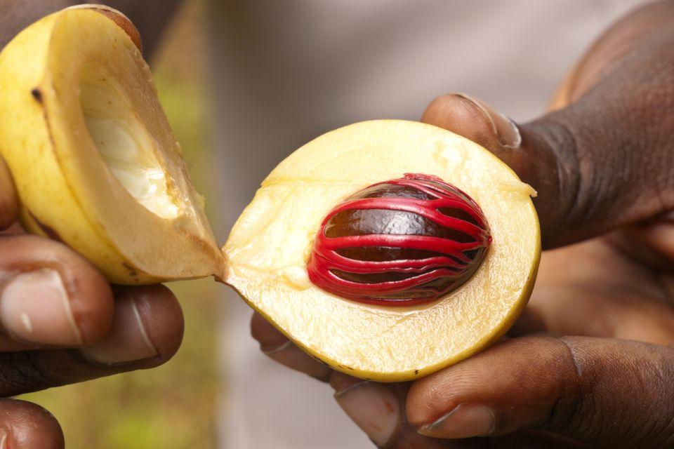 Las especias ? el árbol del pan, El spice-tour, Los paisajes, Zanzibar