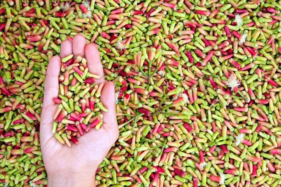 Las especias ? la nuez moscada, El spice-tour, Los paisajes, Zanzibar