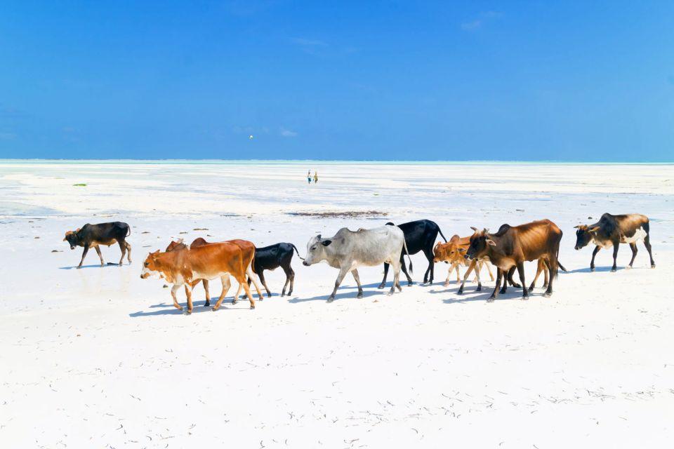 Cestas para la pesca en la playa de Nungwi, La costa del noroeste, Las costas, Zanzibar