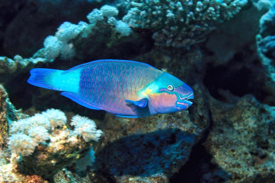 La fauna submarina, La fauna, Zanzibar
