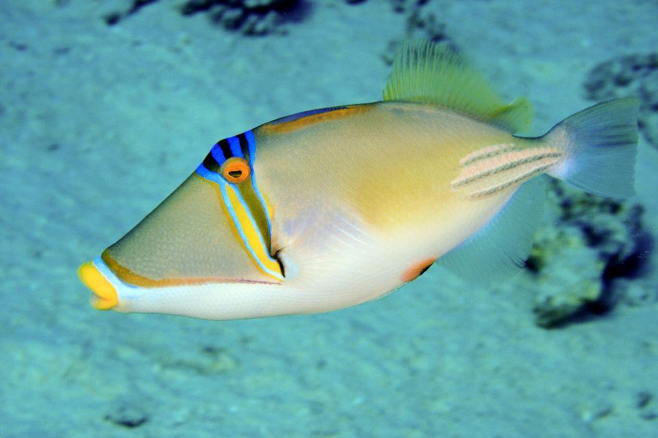 , La fauna submarina, La fauna, Zanzibar