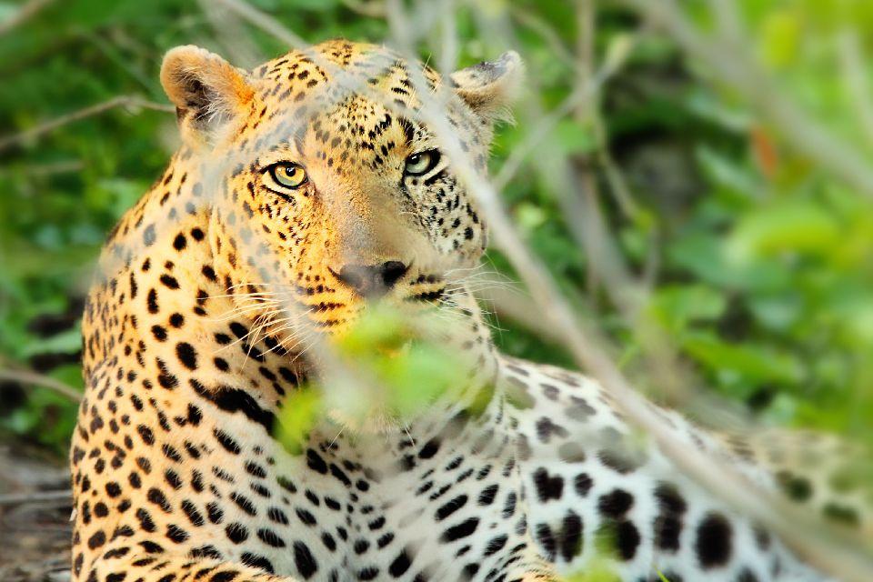 El Parque Nacional Nyanga , Zimbabwe