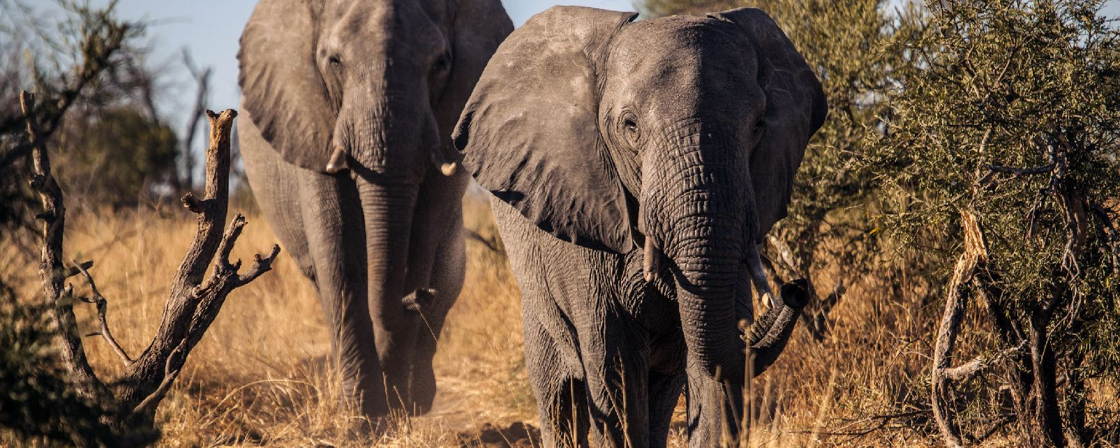 Le Gonarezhou National Park , Zimbabwe