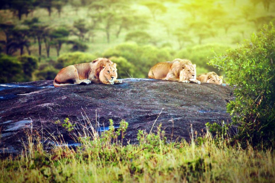 Hwange National Park , Zimbabwe