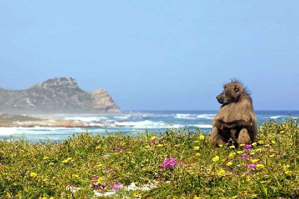 The peninsular coast , Yzerfontein , South Africa