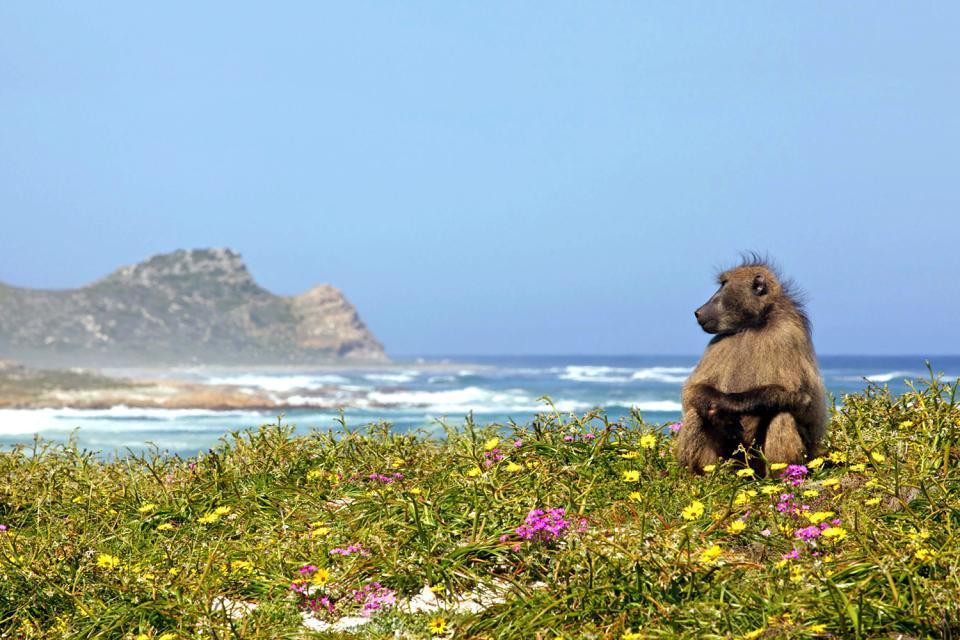La costa della penisola , Yzerfontein , Sudafrica