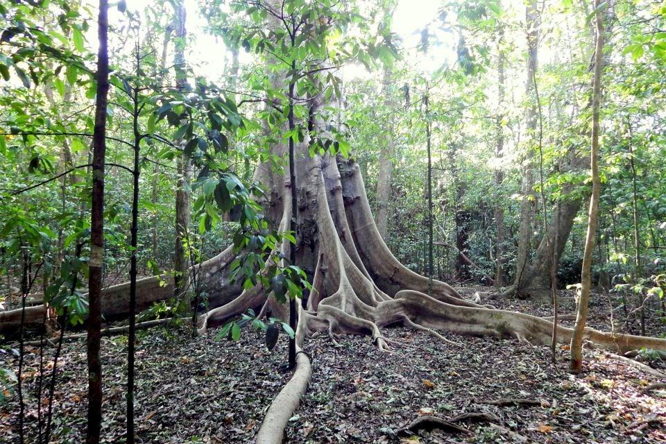 Image result for El Parque Nacional de Guanacaste belice
