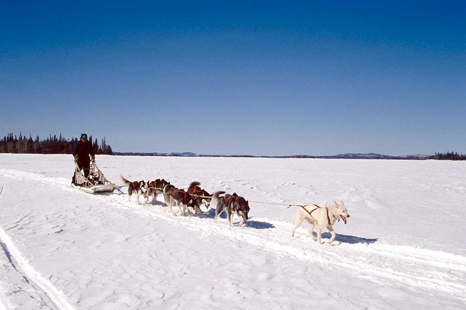 Winter activities , Dog sleds , Canada