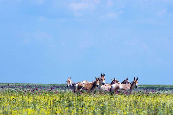 La faune et la flore, Iran, perse, Moyen-Orient, faune, animal, mammifère.