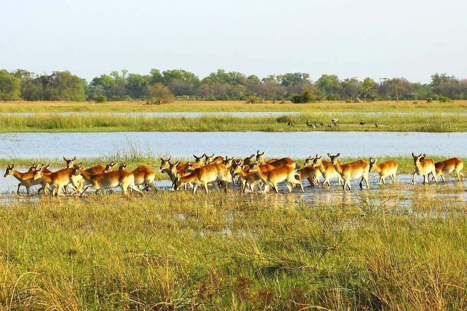 Mamíferos , Los mamíferos , Botsuana
