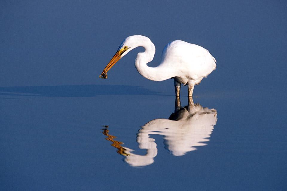 Oiseaux , L'observation des oiseaux , Botswana