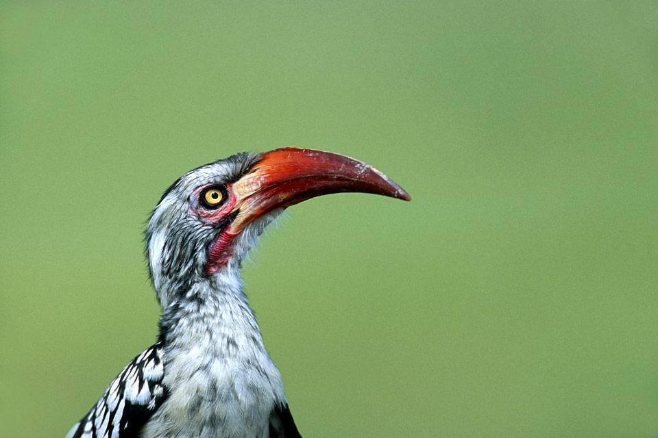 Oiseaux , Les oiseaux , Botswana