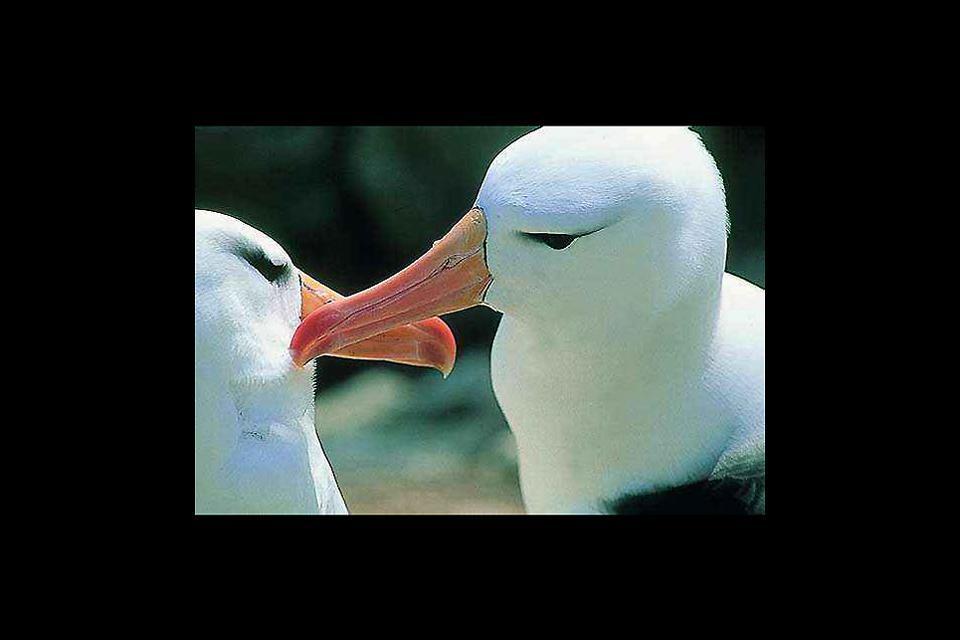 Wildlife , Wildlife in the Falkland Islands , The Falkland Islands