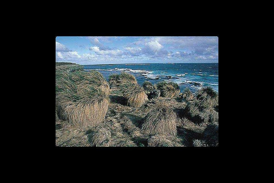 Plantlife , The flora in the Falkland Islands , The Falkland Islands