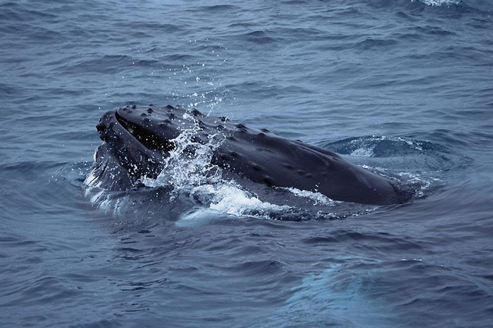 Water activities , Icelandic whale , Iceland