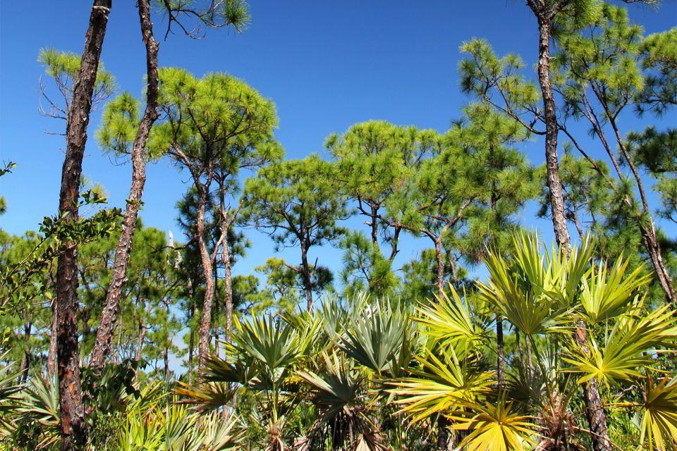 Pine Island und Cayo Costa , USA