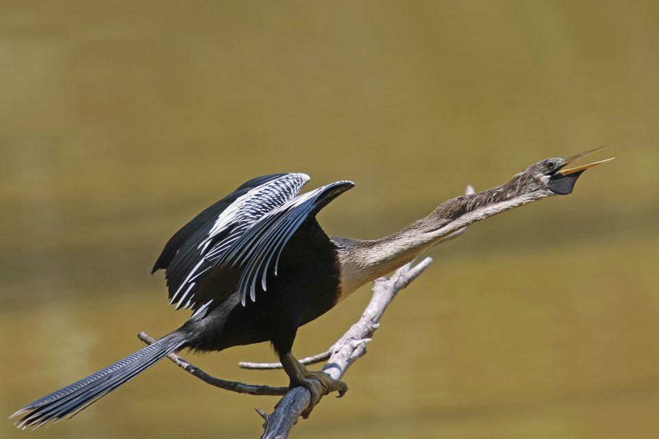 Pine Island und Cayo Costa , Vogelbeobachtung, Pine Island , USA