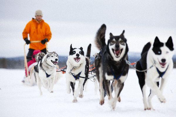 Passeggiata in slitta , Un'avventura magica , Finlandia
