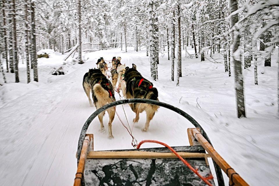 Schlittenfahrten , Schlittenhund , Finnland