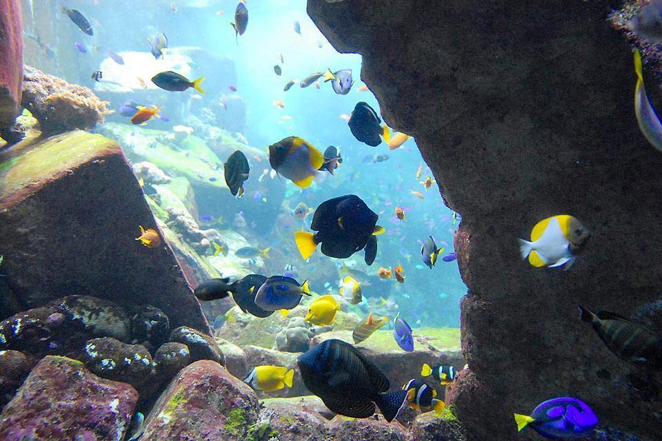 Dinner unter Wasser , Dubai und die Emirate